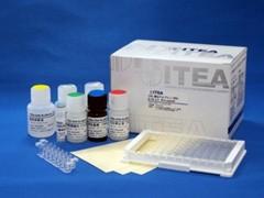 ITEA 卵白アルブミン(OVA) ELISA キット (抗体固相化済)