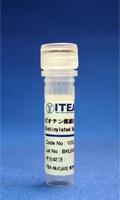 ビオチン標識抗BSAポリクローナル 抗体